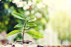 Growing saving money concept. Money management and Financial chart stock images