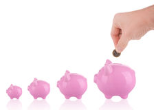 Growing savings - putting coin into piggy bank Royalty Free Stock Images