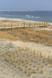 Growing Sea Oats Stock Images