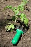 Growing seedling Stock Photography