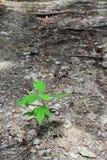 Growing Seedling Stock Photo