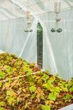 Growing of seedlings in greenhouse Royalty Free Stock Photo