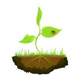 Growing shoots out of the ground Royalty Free Stock Images