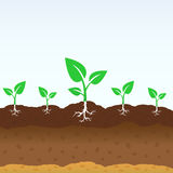 Growing shoots out of the ground Royalty Free Stock Photo