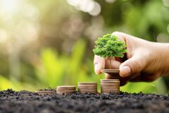 Growing a small tree with money, including money that grows on the ground in a lush environment, ideas for investment success.