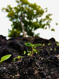 Growing small young plant in black soil Royalty Free Stock Photography