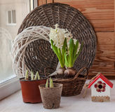 Growing spring flowers on the balcony Royalty Free Stock Photography