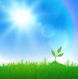 Growing sprout and sunlight Royalty Free Stock Image