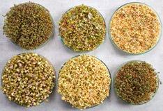 Microgreens, organic food. Royalty Free Stock Image