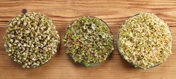 Microgreens, organic food. Stock Photos