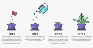 Growing stages of plant. Growing plant stages. Seeds, watering can, sprout and grown plant. House plant in flowerpot. Line style flat illustration of house plant stock illustration
