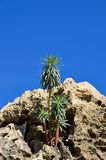 Growing from stone. Warm climate plants sprout up blocks of stone Royalty Free Stock Photos