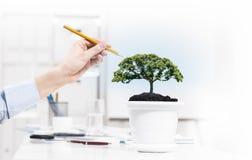 Growing success Stock Photos