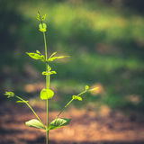 Growing in sunlight Royalty Free Stock Photo