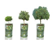 Growing Tangerine Trees Royalty Free Stock Image