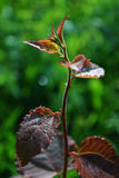 Growing tree Stock Photography