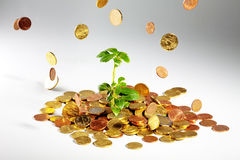 Growing tree on coins. Coins are falling on a plant in a heap of money stock photography
