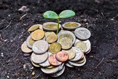Growing a tree. A tree growing on coins / save the world Royalty Free Stock Photography