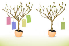 Growing tree from eggshell with price tag. Royalty Free Stock Photography