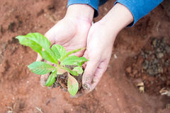 Growing a tree in the forest Royalty Free Stock Images