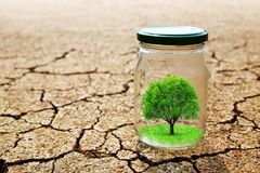 Growing tree in a glass on dry cracked earth. Stock Photo