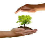 Growing tree in hand Stock Images