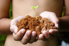 Growing tree in hand. Reduce global warming Stock Image