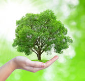 Growing tree in hand Royalty Free Stock Images