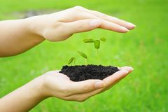 Growing a tree Royalty Free Stock Photos