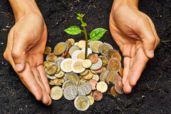 Growing a tree. Hands holding a tree growing on coins / save the world stock photo
