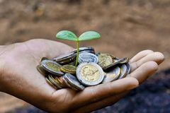 Growing a tree. Hands holding a tree growing on coins / save the world royalty free stock photography