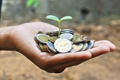 Growing a tree. Hands holding a tree growing on coins / save the world stock image