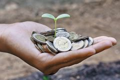 Growing a tree. Hands holding a tree growing on coins / save the world Stock Photos