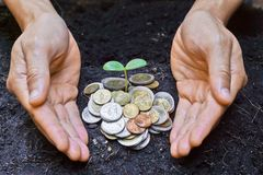 Growing a tree. Hands holding a tree growing on coins / save the world royalty free stock photo