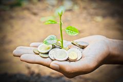 Growing a tree. Hands holding a tree growing on coins / save the world stock photography