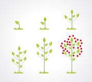 Growing tree icon set Stock Images