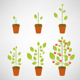 Growing tree icon set Stock Photos