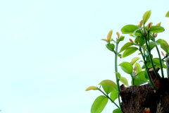 Growing tree. The little tree keep growing Royalty Free Stock Images
