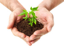 Growing tree Stock Images