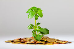 Growing Tree On A Heap Of Money Stock Photography