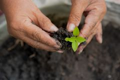 Growing the tree. save the planet concept. Growing the tree with green brush. save the planet concept Stock Photo