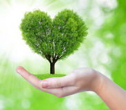 Growing tree in the shape heart in hand. On green background Royalty Free Stock Photo