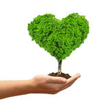 Growing tree in the shape heart. In hand isolated on white Royalty Free Stock Image