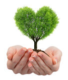 Growing tree in the shape heart in hand Stock Photos