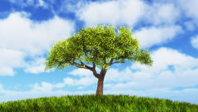 Growing tree on sunny hill. stock footage