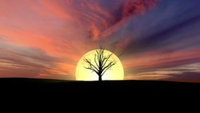 Growing tree at sunrise 3d rendering. With clouds stock footage