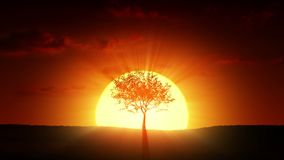 Growing tree at sunrise stock footage