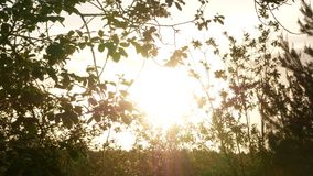 Growing tree at sunrise 4k. Growing tree at sunrise video stock video