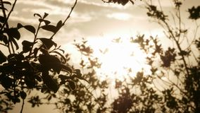Growing tree at sunrise 4k. Growing tree at sunrise video stock video footage