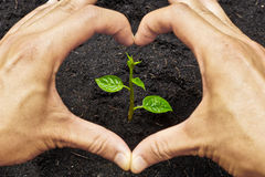 Growing a tree. Two hands forming a heart shape around a young green plant / planting tree royalty free stock photos